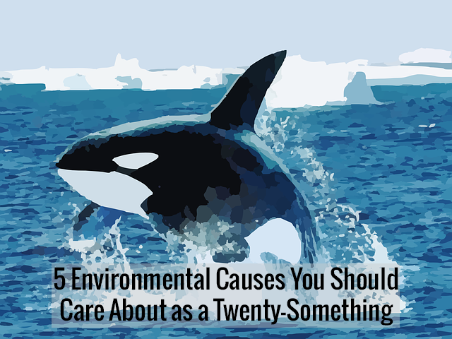 Five Environmental Causes You Should Care About as a Twenty-Something