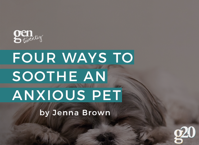 4 Ways To Soothe an Anxious Pet
